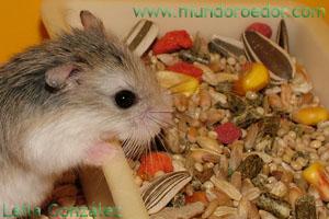 Mundo roedor - Comida para ratones ...